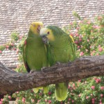 A pair of happy parrots at the Henry Doorly Zoo.