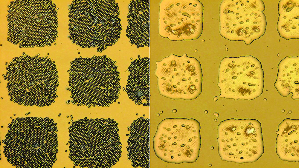 Microscopic particles of polystyrene reside on an elastic surface before (left) and after being welded